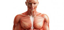 Jak si vytvořit svaly, když jste hubeňour?